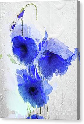 Apparel Canvas Print - Cobalt Poppies by Mindy Sommers