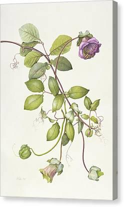 Cobea Scandens Canvas Print by Margaret Ann Eden