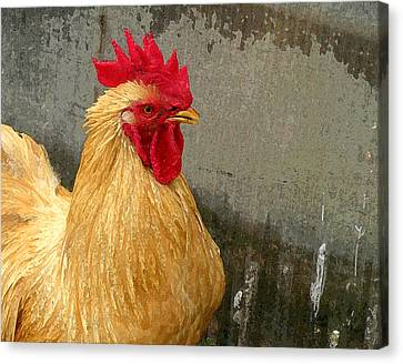 Cock Of The Walk Canvas Print