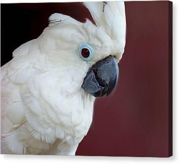Cockatoo Portrait Canvas Print