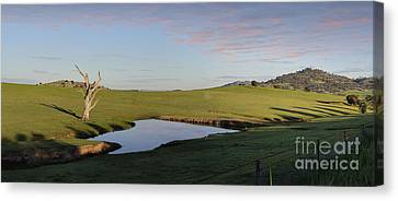 Cockatoos Roost At A Watering Hole Wyangala Canvas Print