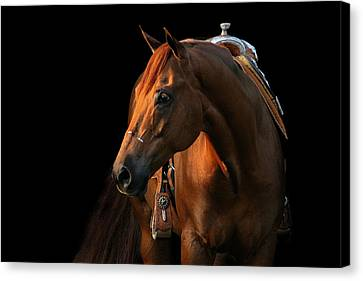 Forelock Canvas Print - Cocoa by Angela Rath