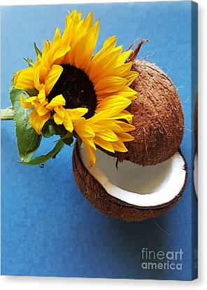 Coconut And Sunflower Harmony Canvas Print by Jasna Gopic