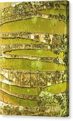 Coconut Palm Bark 1 Canvas Print by Brandon Tabiolo - Printscapes