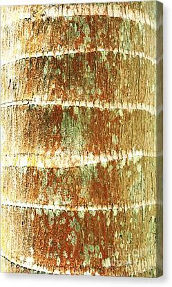 Coconut Palm Bark 2 Canvas Print by Brandon Tabiolo - Printscapes