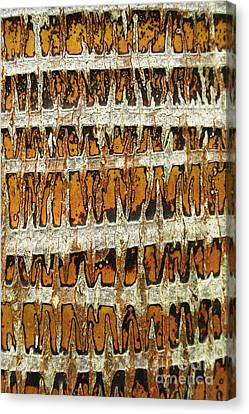 Coconut Palm Bark 3 Canvas Print by Brandon Tabiolo - Printscapes