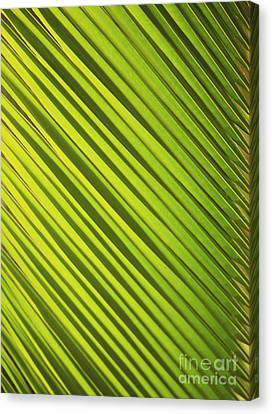 Coconut Palm Canvas Print by Brandon Tabiolo - Printscapes