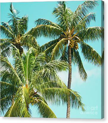 Canvas Print featuring the photograph Coconut Palm Trees Sugar Beach Kihei Maui Hawaii by Sharon Mau