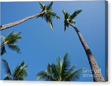 Coconut Palms Canvas Print