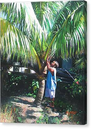 Coconut Shade Canvas Print by Colin Bootman