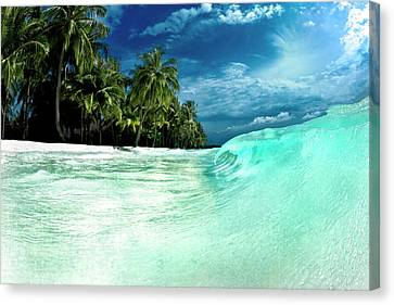 Coconut Water Canvas Print by Sean Davey