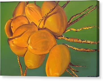 Coconuts Canvas Print by Katiana Valdes