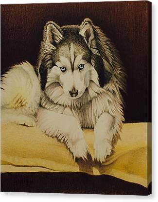 David Hoque Canvas Print - Cody by David Hoque