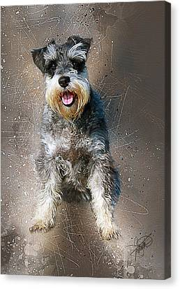 Standard Schnauzer Canvas Print - Cody by Tom Schmidt