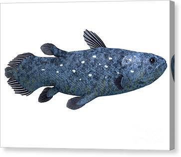 Coelacanth Fish On White Canvas Print by Corey Ford
