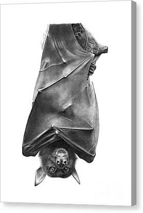 Coffie The Fruit Bat Canvas Print by Abbey Noelle