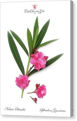Canvas Print featuring the photograph Cog  Nerium Oleander Splendens Giganteum by Wilhelm Hufnagl