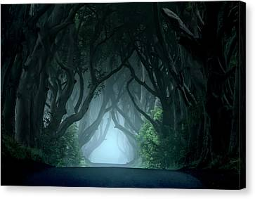 Cold And Blue Morning At Dark Hedges Canvas Print by Jaroslaw Blaminsky