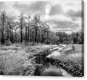 Cold Creek Canvas Print