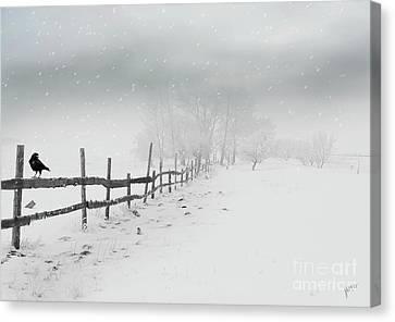Cold Crow Canvas Print