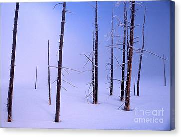 Canvas Print featuring the photograph Cold Morning by Edward R Wisell