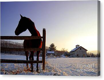 Cold Morning Canvas Print by Sabine Jacobs