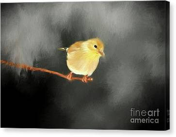 Canvas Print featuring the photograph Cold Winters Day by Darren Fisher