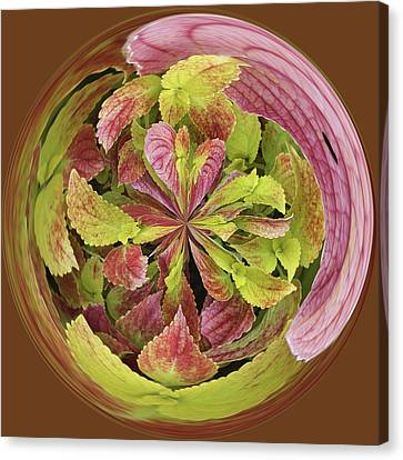 Canvas Print featuring the photograph Coleous In Orb by Bill Barber