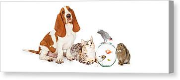 Collage Of Domestic Pets Together Canvas Print by Susan Schmitz