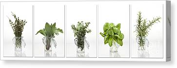 Collage Of Herbs In A Glass Jar Canvas Print by Wolfgang Steiner
