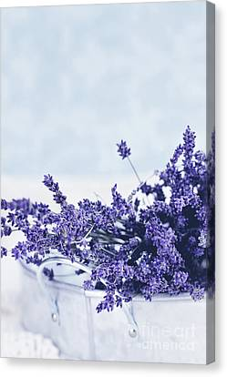 Canvas Print featuring the photograph Collection Of Lavender  by Stephanie Frey