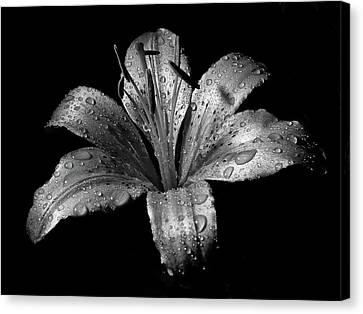 Lilies Canvas Print - Collection by Photograph by Ryan Brady-Toomey