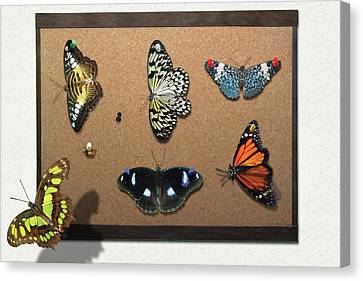 Collector - Lepidopterist - My Butterfly Collection Canvas Print by Mike Savad