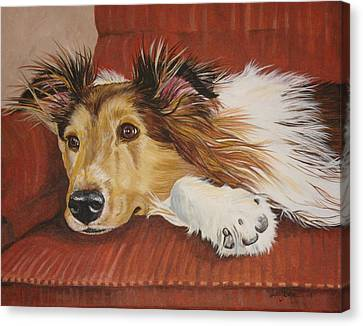 Collie On A Couch Canvas Print by Laura Bolle