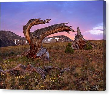 Coloful High Mountain Splendor Canvas Print by Leland D Howard