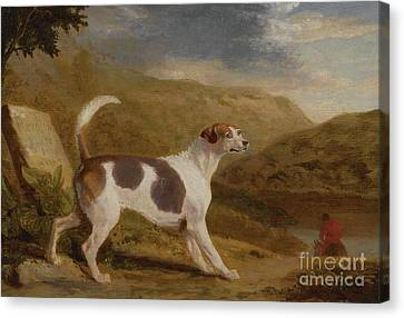 Colonel Thornton's Hound Canvas Print by MotionAge Designs