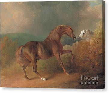 Breeder Canvas Print - Colonel Thornton's Jupiter With A Grey Mare  by Sawrey Gilpin