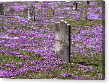 Colonial Tombstones Amidst Graveyard Phlox Canvas Print by John Stephens