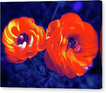 Canvas Print featuring the photograph Color 12 by Pamela Cooper