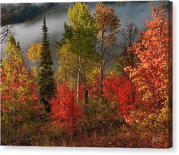 Splendor Canvas Print - Color And Light by Leland D Howard