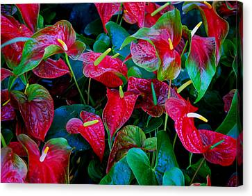 Canvas Print featuring the photograph Color Blast by Nancy Bradley
