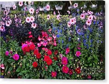Blue Begonia Canvas Print - Color Burst Garden In Oslo by Carol Groenen