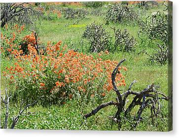 Color In The Desert Canvas Print by Laurel Powell