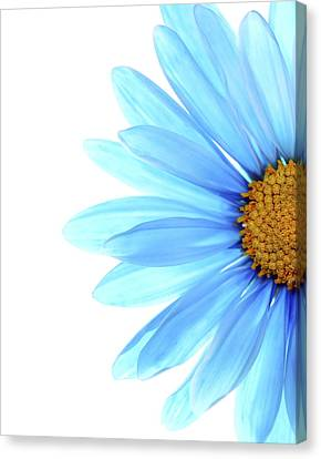 Flowers Canvas Print - Color Me Blue by Rebecca Cozart