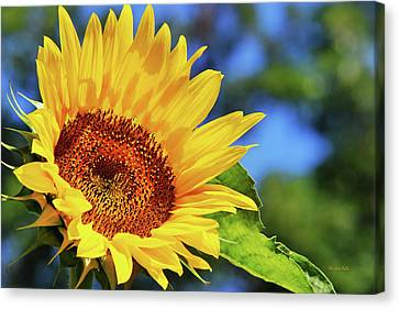 Color Me Happy Sunflower Canvas Print