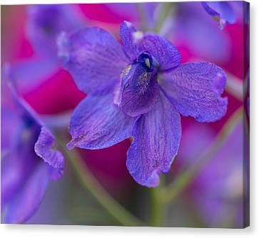Canvas Print featuring the photograph Color Me Spring by Julie Andel
