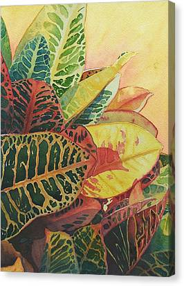 Canvas Print featuring the painting Color Of Crotons by Judy Mercer