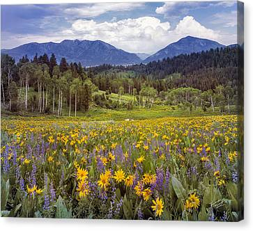 Fields Of Flowers Canvas Print - Color Of Spring by Leland D Howard