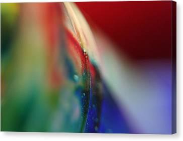 Color Run Canvas Print by Rachelle Johnston