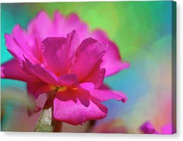 Color2 Canvas Print